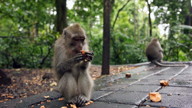 w_Monkey